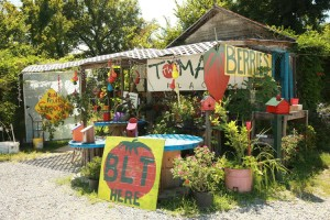 The Tomato Place in Vicksburg, MS.