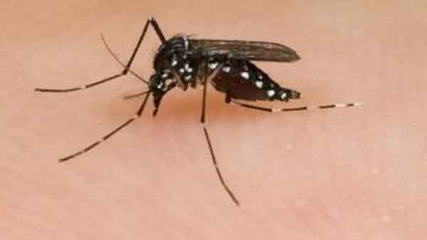 Malaria, caused by a parasite, is transmitted to humans through infected female mosquitoes. The disease was once rampant in Baker County, Georgia.