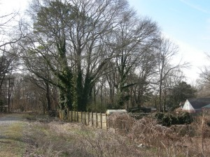 Many of the trees pictured here likely would have to be cut down.