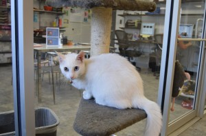 """Frost sits in the cat kennel area of the Fulton County shelter, which was renovated with a grant from the Purina Cat Chow's """"50 Shelters, 50 Years"""" program. Credit: LifeLine Animal Project"""