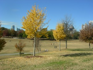 A view of the meadow at Piedmont Park