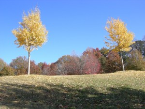 A pretty fall day at Piedmont Park (Photos by Maria Saporta)