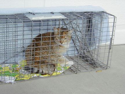 Feral cat sterilized