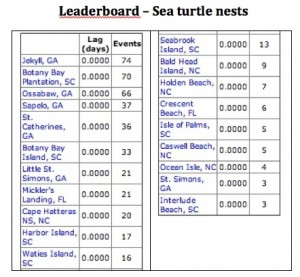 Click on the image to see a larger version. Credit: seaturtle.org