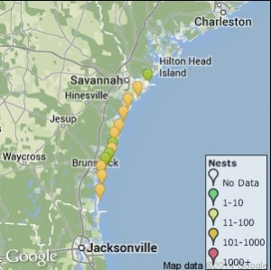 This locator map shows where sea turtle nests have been discovered this year along the Georgia coast. Credit: seaturtle.org