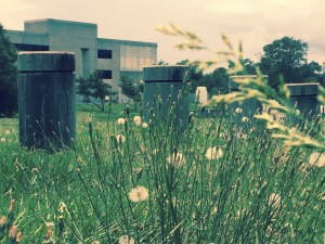 Flowers have sprouted in a field in front of the former Forces Command buiding at Fort McPherson. Credit: Donita Pendered