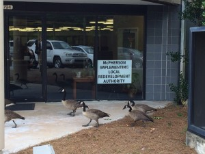 Geese pass the front door of the offices of the McPherson Implementing Local Redevelopment Authority. Credit: David Pendered