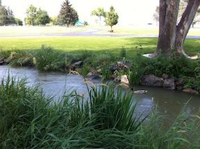 A stream with ducks runs near my parents' cemetery plot in Twin Falls, ID.