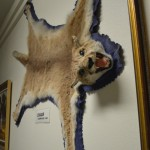 Also in the TV museum are local relics like animal trophies.
