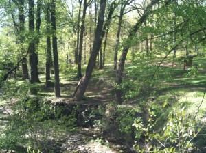 Brownwood Park, near East Atlanta Village, is relatively undeveloped in comparison to other Atlanta parks. Credit: takingbackatlanta.blogspot.com