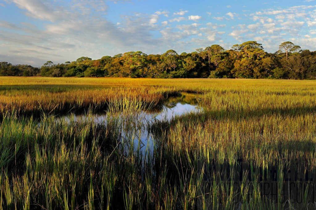 Marshes of Glynn County