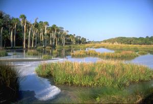 Marsh on Ossabaw Island. Credit: Ossabaw Island Education Alliance