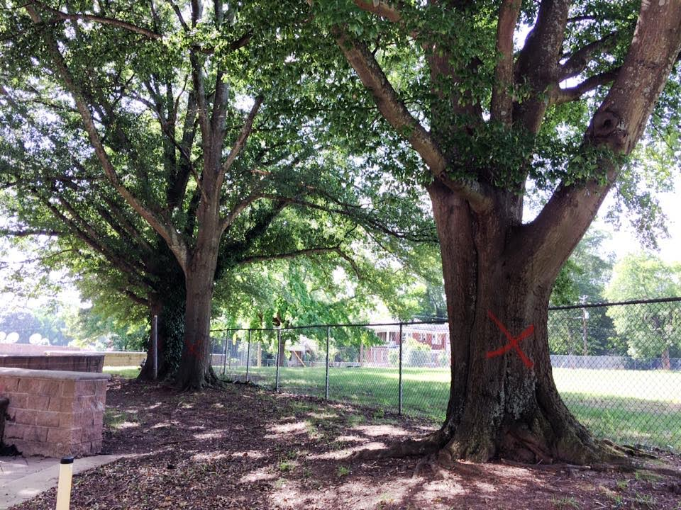 Ryan Cagle, a resident of West End, alerted SaportaReport of the plans to remove the trees.