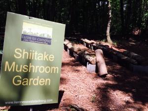 KSU, shiitake mushroom garden