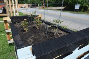 Tomatoes and flowers were planted in the community garden of the East Atlanta Corner Project. The containers were made of shipping pallets, lined with garden bed lining, and filled with soil. Credit: Sylvia McAfee