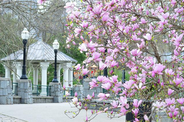 Spring Gazebo by Lisa Panero