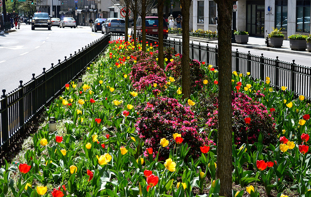 Downtown island of flowers by Lisa Panero