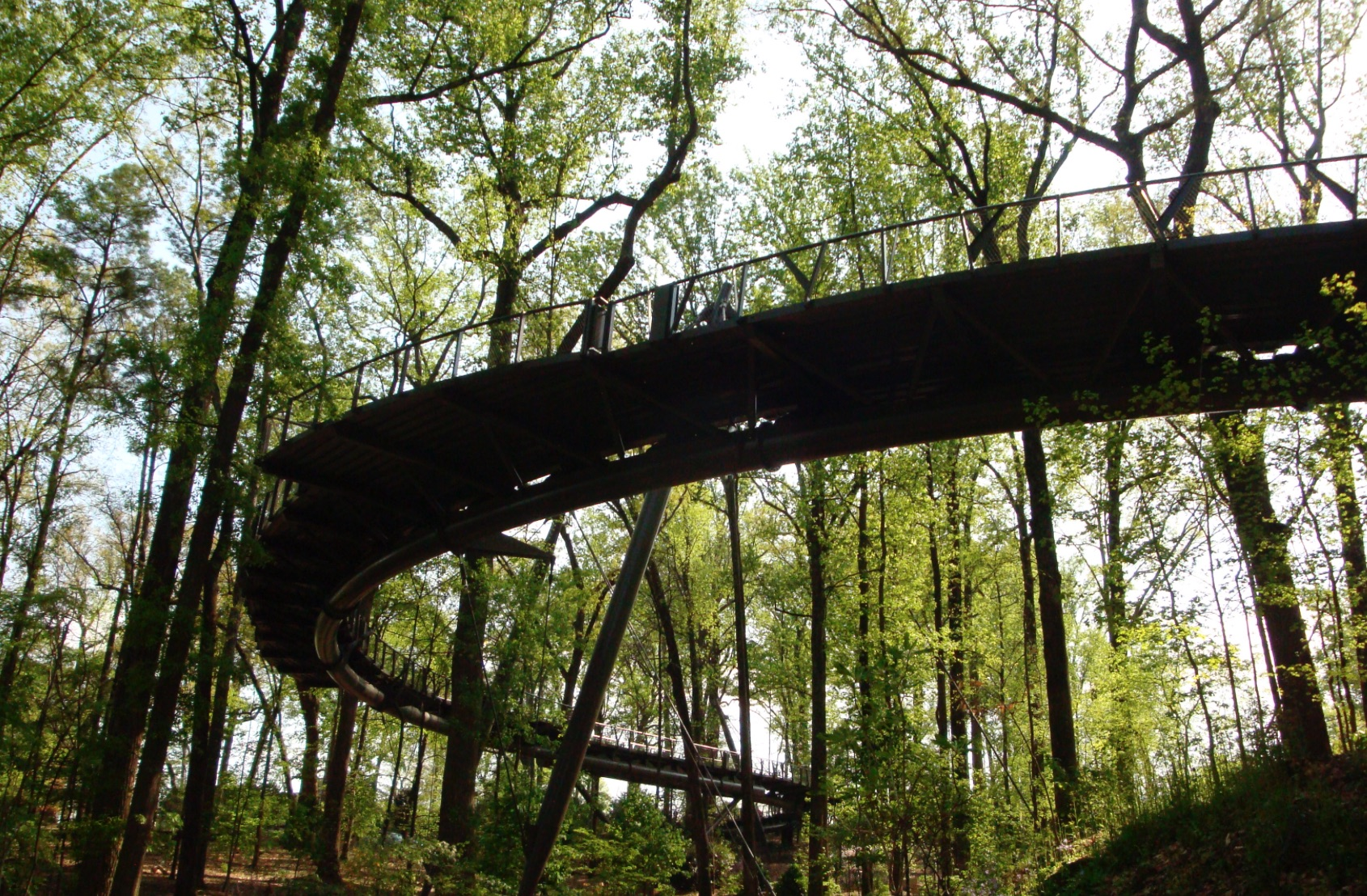 Tree canopy, Atlanta Botanical Garden