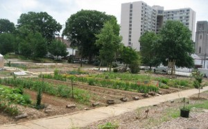 Atlanta is home to at least 85 community and school gardens, and at least 10 urban farms, according to the proposed Atlanta Climate Action Plan, which proposes to expand the city's food programs. Credit: westsidecommunities.org