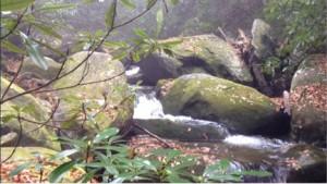 Conasauga River in fall