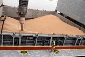Wheat exports, Brunswick