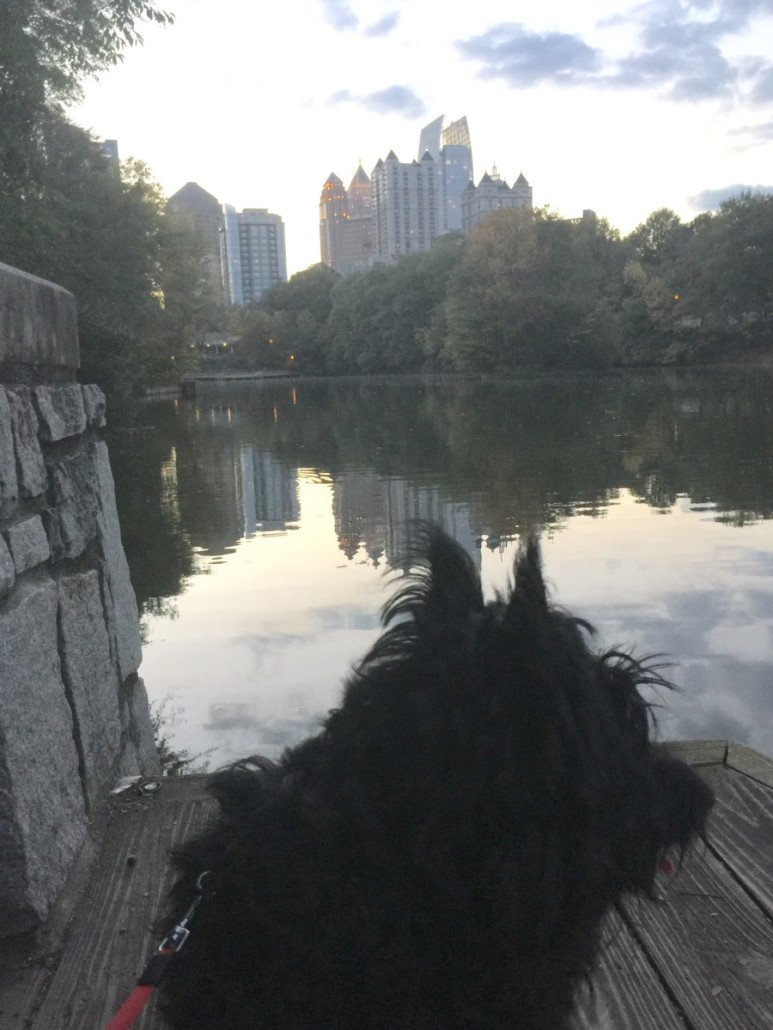 Pup's first weekend in the city by Karla Vazquez
