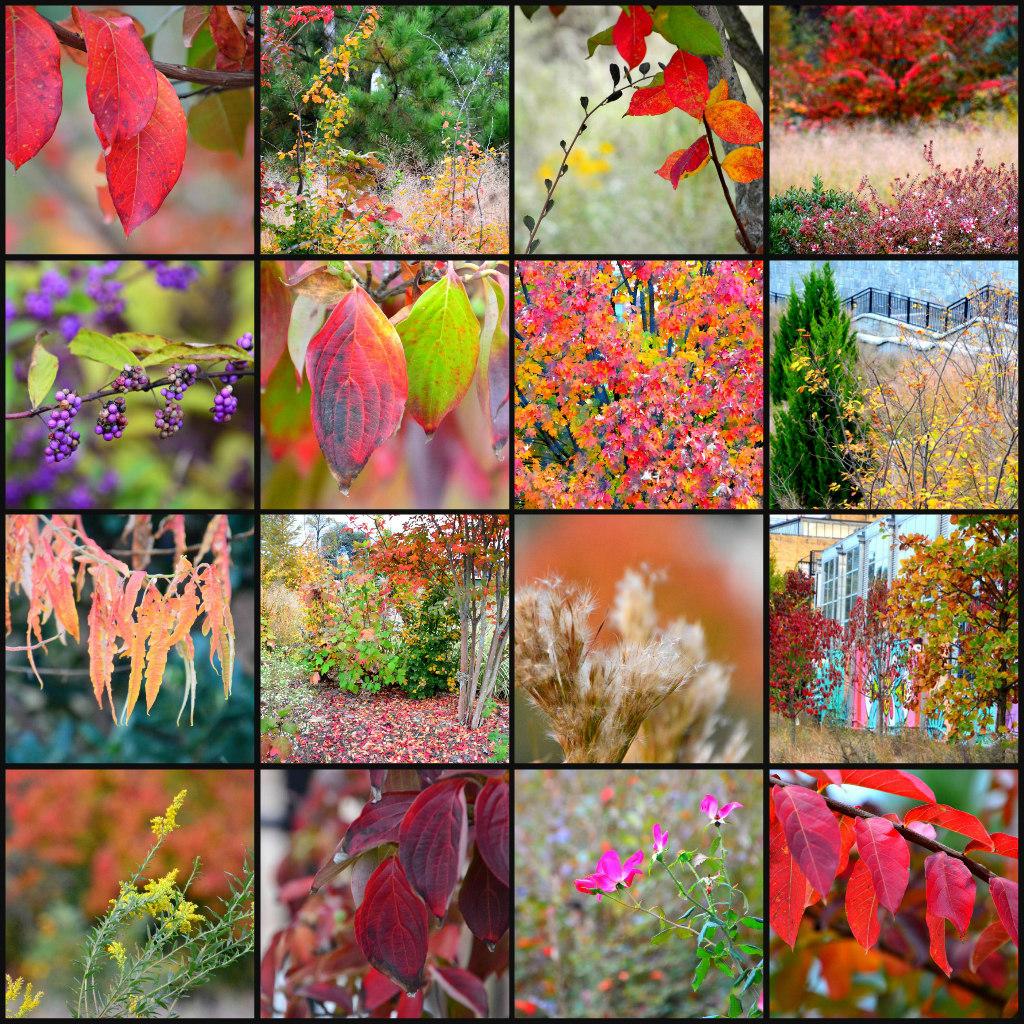 ATL Fall Colors by Lisa Panero