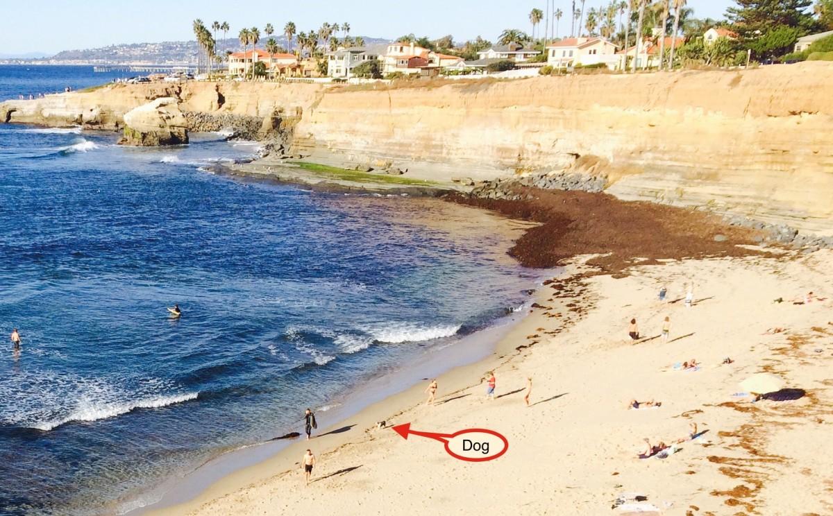 San Diego, dog below cliffs