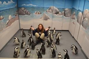 Penguin chicks at Georgia Aquarium