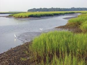 Georgia marshland