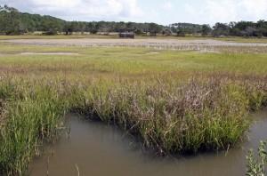 Sapelo marshland