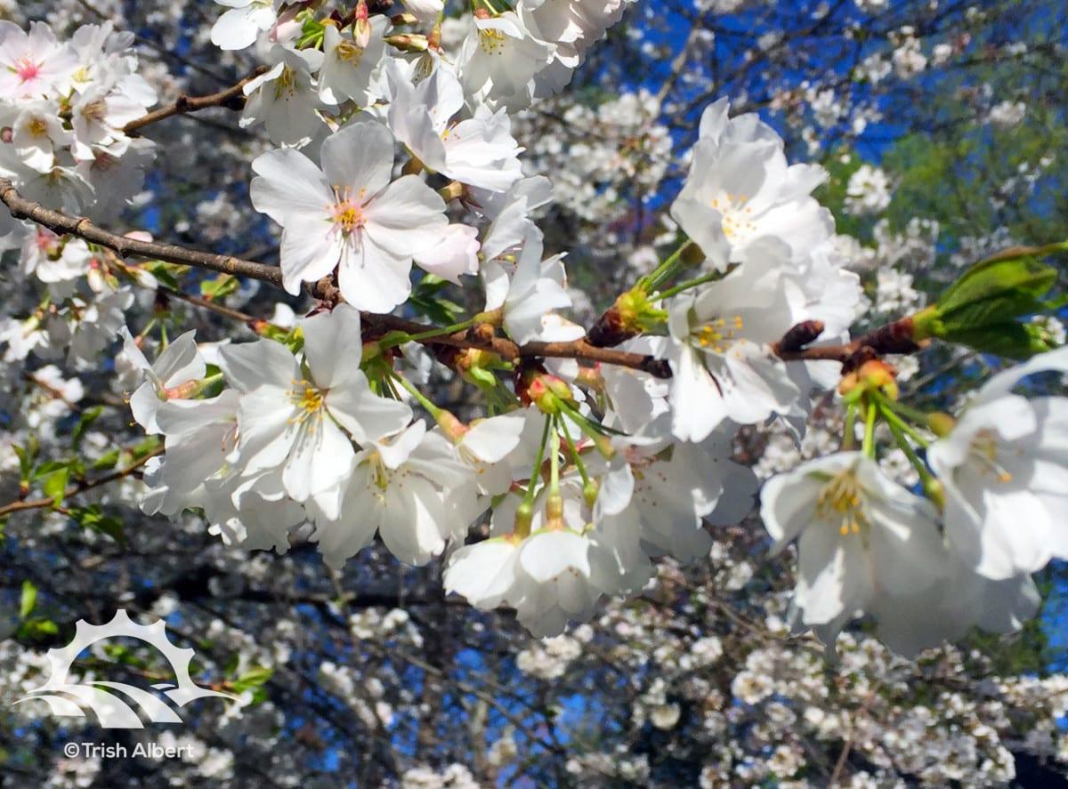 Spring Flowers by Trish Albert