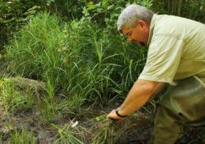 bog turtle tracking