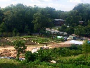 Collegetown Farm