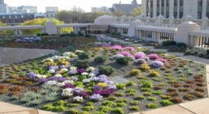 Atlanta wants to add seating at its green roof atop City Hall, get weeds under control and add an appropriate irrigation system. Credit: greenroofs.com