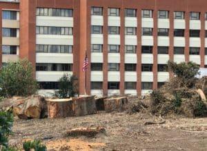 Piedmont Hospital trees