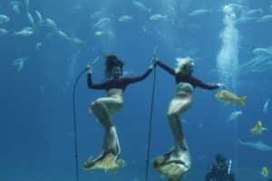 mermaids, weeki wachee