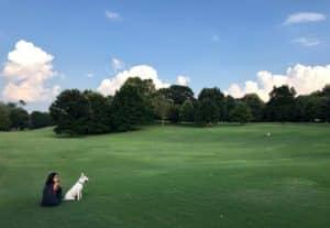 piedmont grass, girl, dog