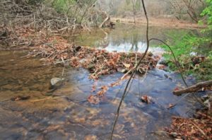 Proctor Creek