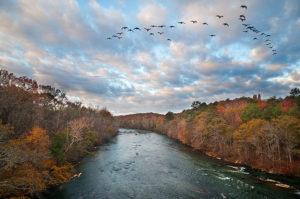 Chattahoopchee, geese flying over I-75 bridge