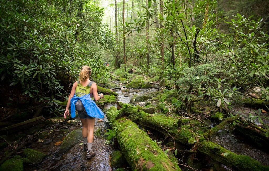 Cohutta Wilderness