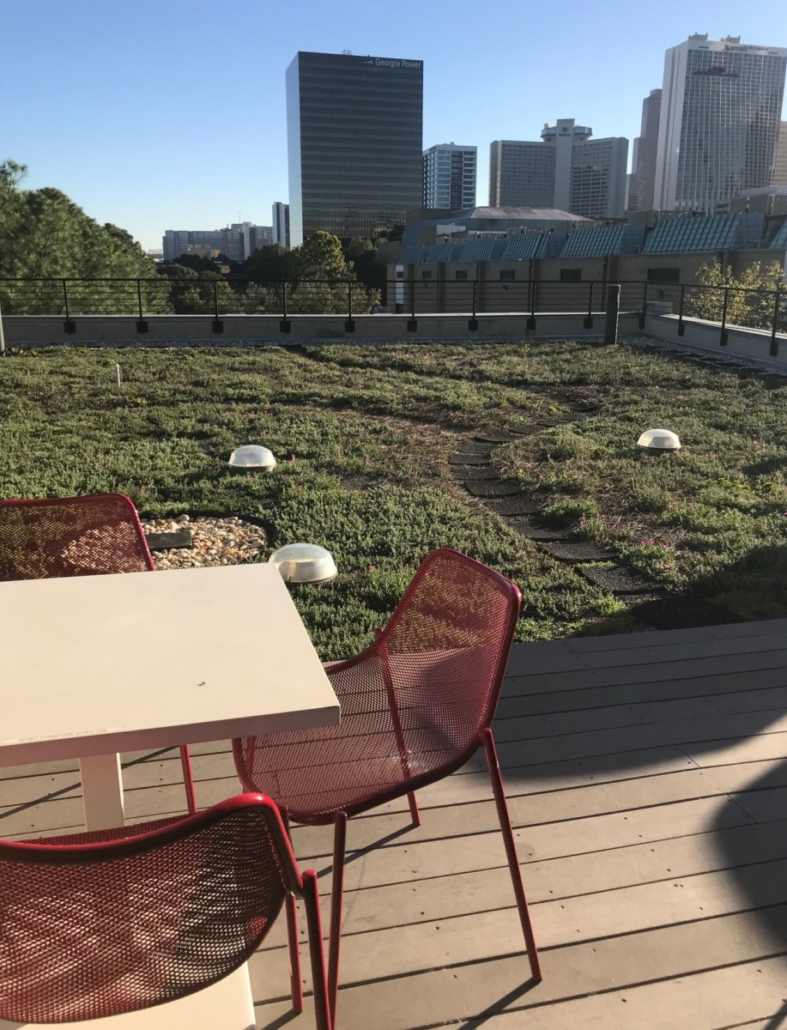Southface green roof