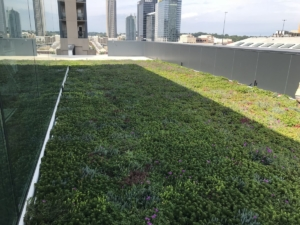 Interface green roof