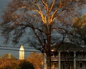 tree ordinance, skyline view