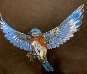 youth birding, primary winner