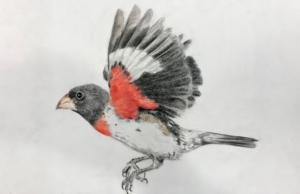 youth birding winner, 2018