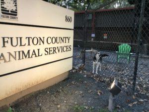 Fulton shelter, dog