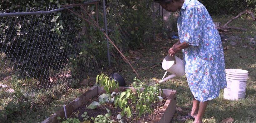 Gil Frank, backyard garden