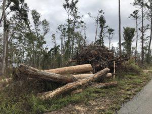 Three Rivers State Park, debris