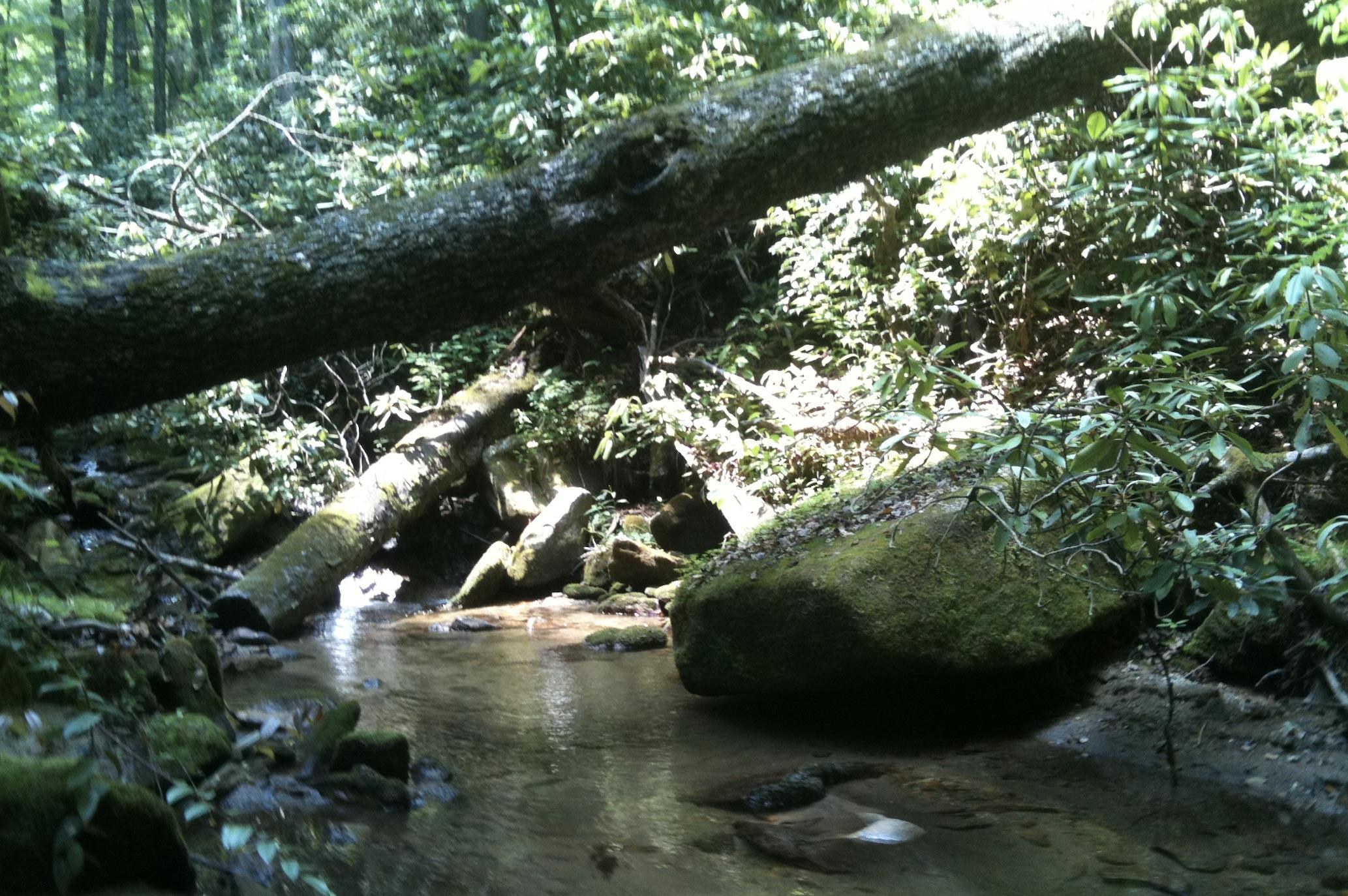 Appalachian creek